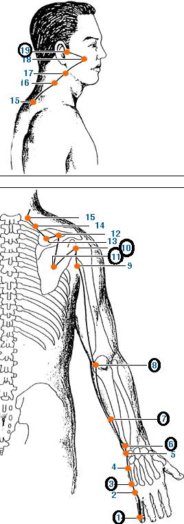 Meridianul intestinului subtire al mainii