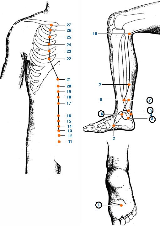 Meridianul rinichiului al piciorului