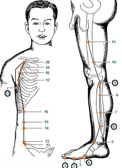 Meridianul splinei al piciorului