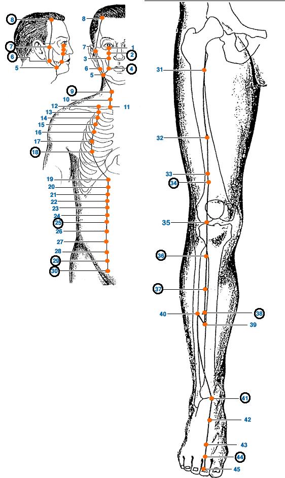 Meridianul stomacului al piciorului