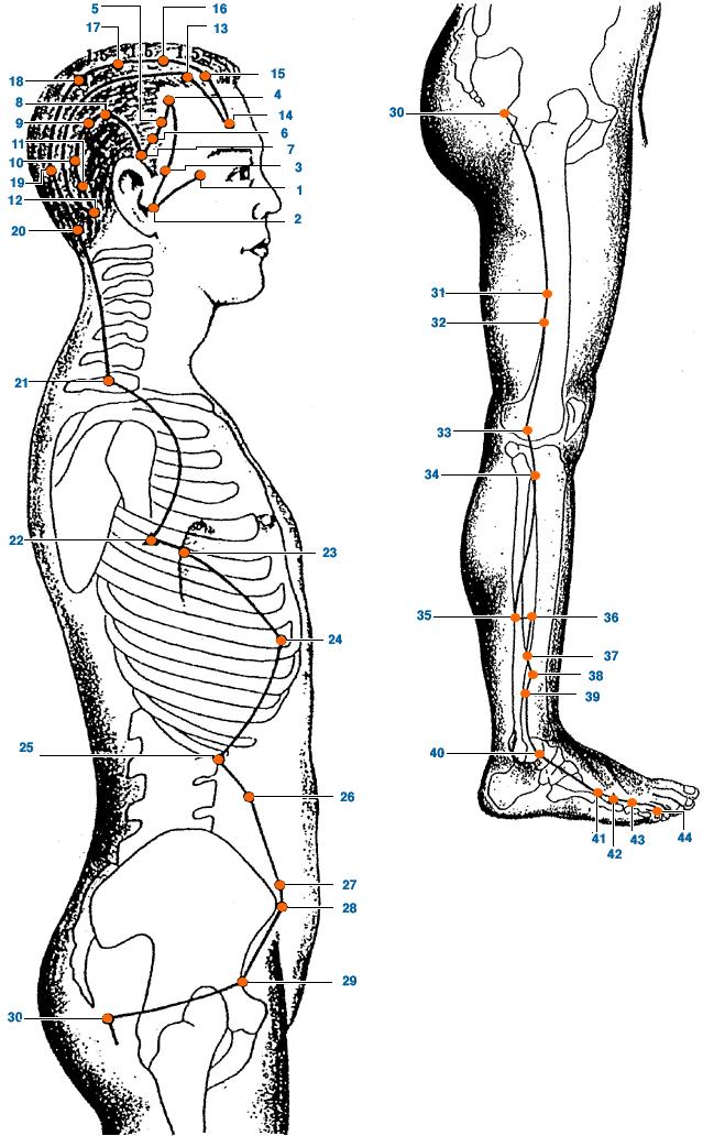 Meridianul vezicii biliare al piciorului