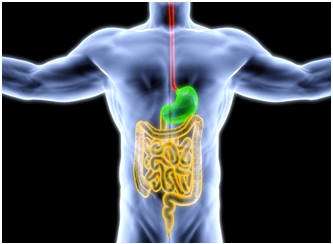 sistemului digestiv