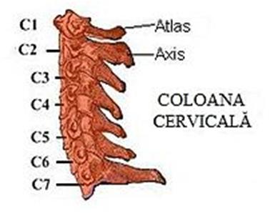 Coloana cervicala