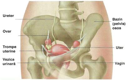 Artroza lombara
